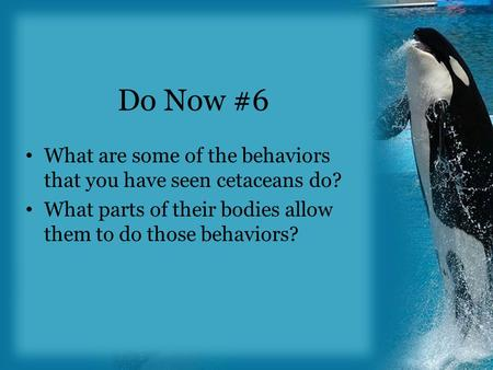 Do Now #6 What are some of the behaviors that you have seen cetaceans do? What parts of their bodies allow them to do those behaviors?