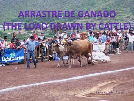 Paula Amador Abreu. This sport belongs to the Castilian culture diffusion, because the cattle of this kind didn't exist in the Canary Islands before the.