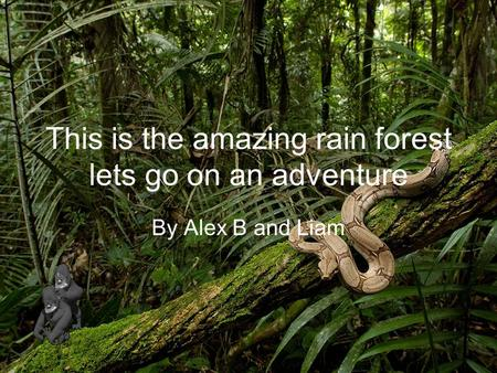 This is the amazing rain forest lets go on an adventure By Alex B and Liam.