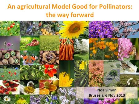 An agricultural Model Good for Pollinators: the way forward Noa Simon Brussels, 6 Nov 2013.