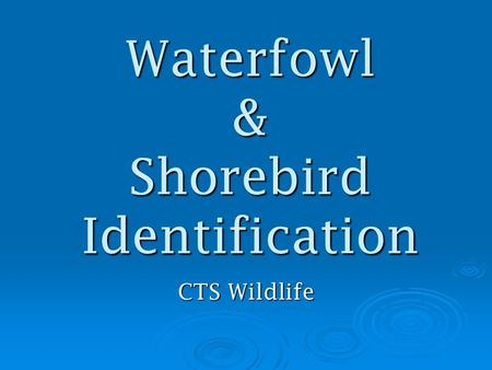 Waterfowl & Shorebird Identification CTS Wildlife.