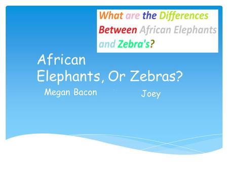 African Elephants, Or Zebras? Bye, Megan Bacon Joey.