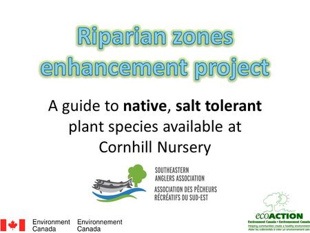 A guide to native, salt tolerant plant species available at Cornhill Nursery.