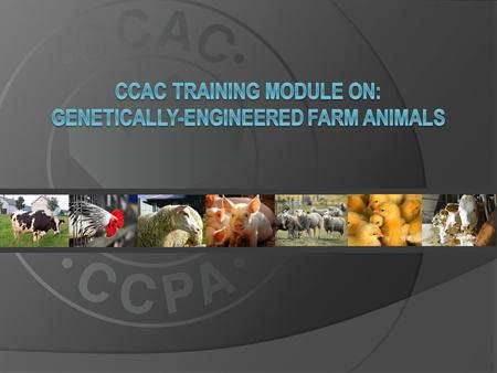 This training module applies to all farm animals derived through deliberate human technological intervention, including: dairy and beef cattle dairy.