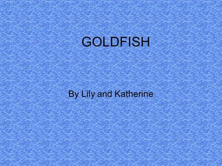 GOLDFISH By Lily and Katherine. HEALTHY FISH Watch your fish swimming to check if it is healthy. When you buy a fish first put the bag in the tank for.