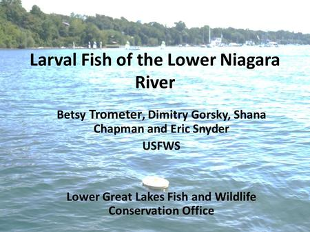 Larval Fish of the Lower Niagara River Betsy Trometer, Dimitry Gorsky, Shana Chapman and Eric Snyder USFWS Lower Great Lakes Fish and Wildlife Conservation.