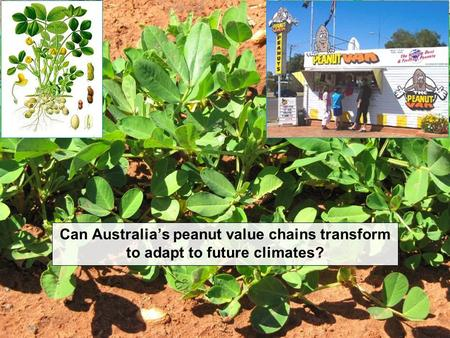 Can Australia's peanut value chains transform to adapt to future climates?