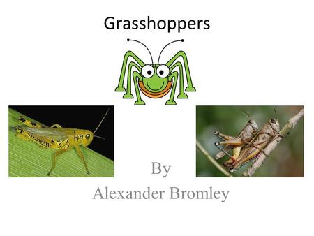 Grasshoppers By Alexander Bromley.