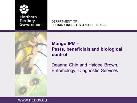 DEPARTMENT OF PRIMARY INDUSTRY AND FISHERIES www.nt.gov.au Deanna Chin and Haidee Brown, Entomology, Diagnostic Services Mango IPM - Pests, beneficials.