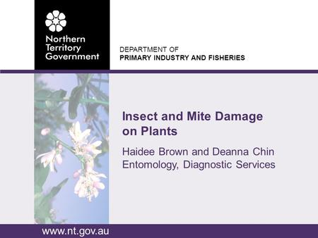 DEPARTMENT OF PRIMARY INDUSTRY AND FISHERIES www.nt.gov.au Haidee Brown and Deanna Chin Entomology, Diagnostic Services Insect and Mite Damage on Plants.