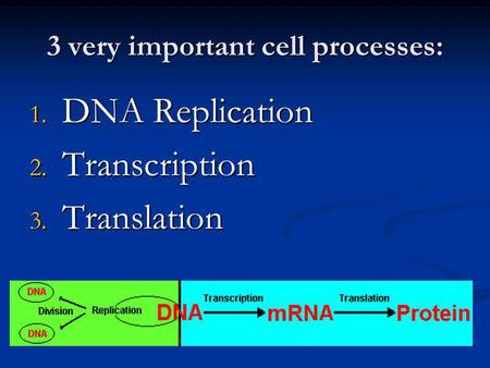 3 very important cell processes: 1. DNA Replication 2. Transcription 3. Translation.