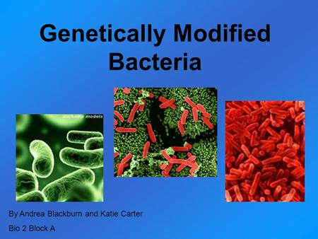 Genetically Modified Bacteria