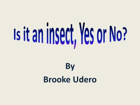 By Brooke Udero. What is an insect? Let's find out!