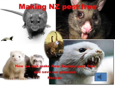 Making NZ pest free How we can make New Zealand pest free and save our precious Natives.