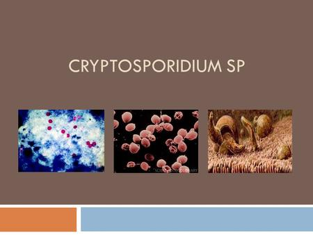 CRYPTOSPORIDIUM SP. What is it?  Cryptosporidium is an emerging coccidian protozoan parasite  It is associated with municipal water supplies which causes.