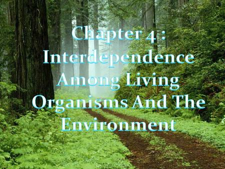 Interdependence Among living Organisms and the environment ecosystem populationcommunities Interaction Between Living organisms Predator- prey Biological.