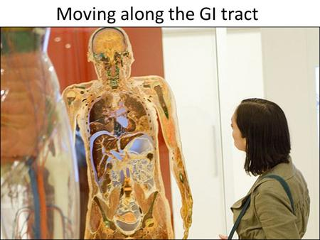 Moving along the GI tract