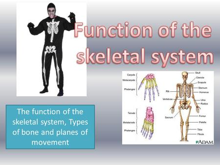 The function of the skeletal system, Types of bone and planes of movement.