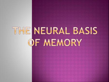  Memories are stored throughout our brains, and linked together through neural pathways.  Different brain areas are involved in different memory types.