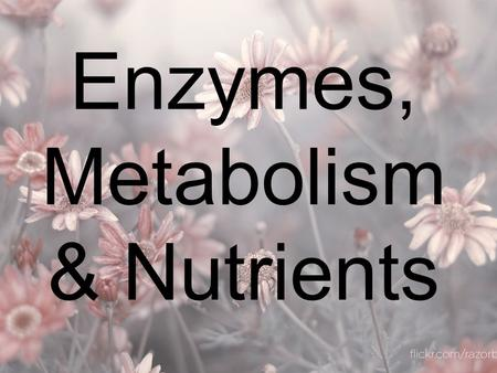 Enzymes, Metabolism & Nutrients. Metabolism Metabolism: all of the chemical reactions which occur in a cell Catabolism: large molecules are broken down.