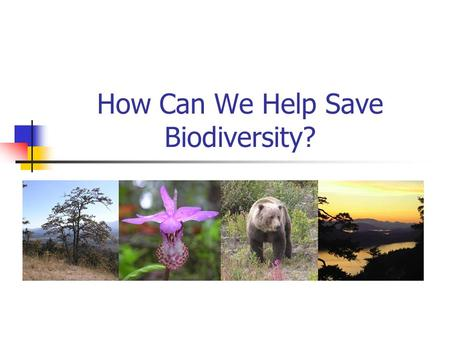 How Can We Help Save Biodiversity?. Conservation of Endangered Species.