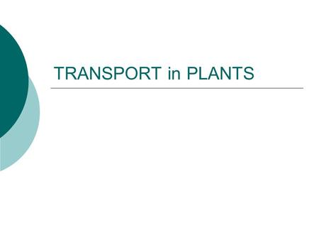 TRANSPORT in PLANTS. What must be transported in plants?  H 2 O & minerals  Sugars  Gas Exchange.