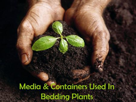 Media & Containers Used In Bedding Plants. Bedding Plant Media Media-materials used to start and grow plants –Soil –Inorganic materials –Commercially.