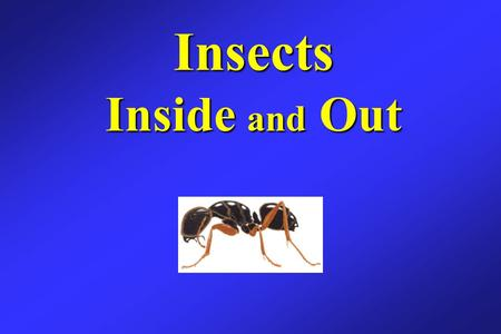 Insects Inside and Out. More than 100,000 species of insects are found almost everywhere in North America, but very few are harmful. Insects are important.