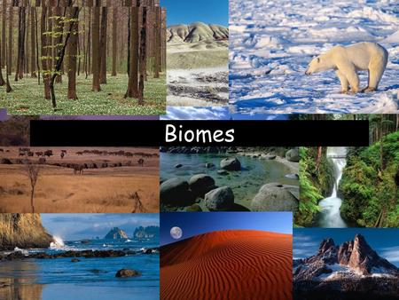 Biomes. What is a Biome? Biomes are large regions characterized by a specific type of climate and certain types of plant and animal communities. –Each.