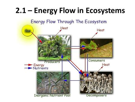 2.1 – Energy Flow in Ecosystems. Energy flow in ecosystems Biomass is the total mass of all living things in a given area. – Biomass can also refer to.