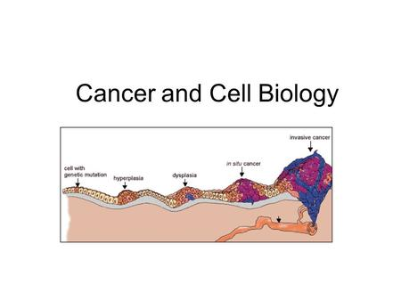 Cancer and Cell Biology. Cancer Facts Group of 100 diseases that develop across time Characterized by uncontrolled cell division Can develop in virtually.