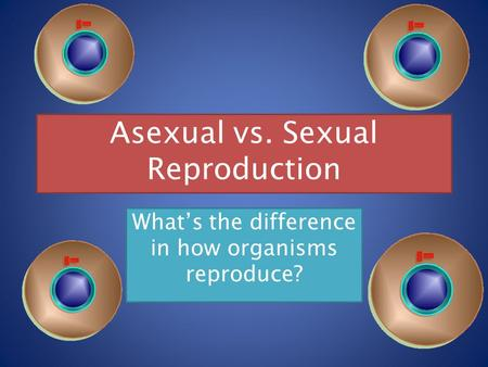 Asexual vs. Sexual Reproduction What's the difference in how organisms reproduce?