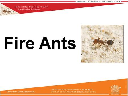 Fire Ants. This PowerPoint is for informational purposes only. If you are required to do Fire Ant Training as part of your Approved Risk Management Plan,
