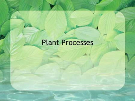 Plant Processes. Photosynthesis-the food manufacturing process in green plants that combine carbon dioxide and water in the presence of light to make.