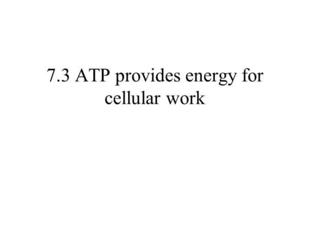 anatomy and physiology + atp resynthesis