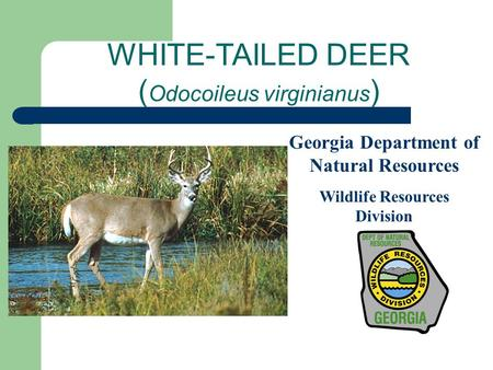 WHITE-TAILED DEER ( Odocoileus virginianus ) Georgia Department of Natural Resources Wildlife Resources Division.