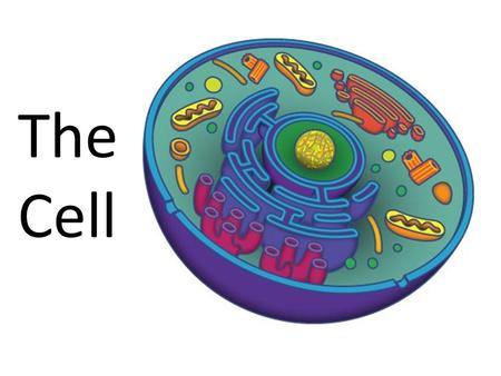 "The Cell. What is a Prokaryote? Prokaryote ?  NO Nucleus or membrane bound organelles.  ""Pro"" = ""No Nucleus""  A single celled organism  DOES have."