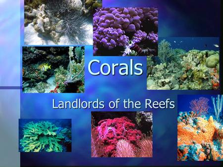 Corals Landlords of the Reefs. What should you know about corals? They are animals Plants live inside of them Two kinds Soft corals Hard corals (These.