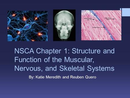 NSCA Chapter 1: Structure and Function of the Muscular, Nervous, and Skeletal Systems By: Katie Meredith and Reuben Quero.