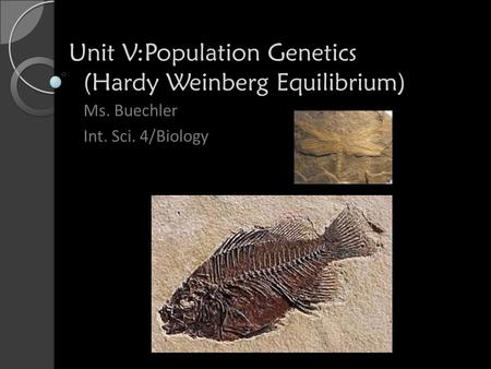 Unit V:Population Genetics (Hardy Weinberg Equilibrium) Ms. Buechler Int. Sci. 4/Biology.