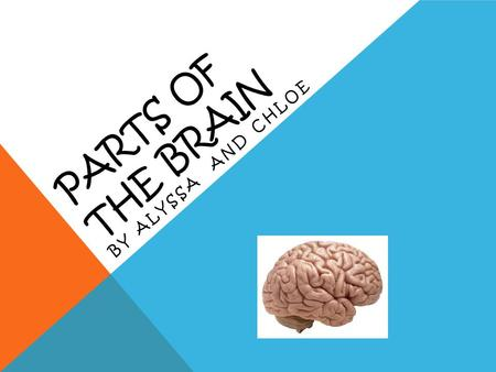PARTS OF THE BRAIN BY ALYSSA AND CHLOE FRONTAL LOBE In the front In charge of:  Reasoning  Planning  Problem solving  Basic movements  Responses.