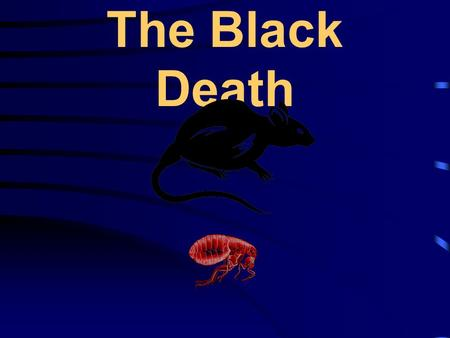 "The Black Death. Key questions There are 3 questions that will be asked during the course of the lesson; 1.What is the ""Black Death""? 2.What caused the."