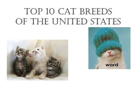 Top 10 Cat Breeds of the United States. Persian Affectionate & loyal Need groomed every day #1 breed since 1871 Flat face with round eyes.