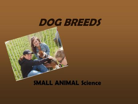 DOG BREEDS SMALL ANIMAL Science. HOUND GROUP Afghan Hound.