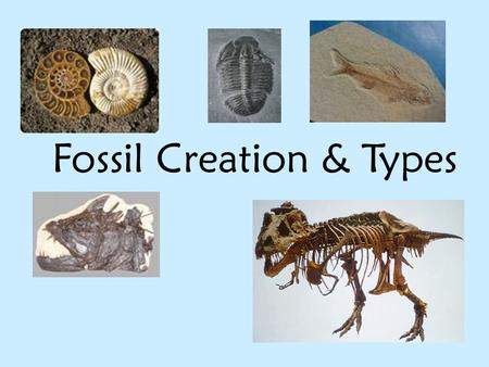 Fossil Creation & Types. The steps to create most fossils in sedimentary rock: 1) Animal dies and sinks to the bottom of shallow water, usually a lake.