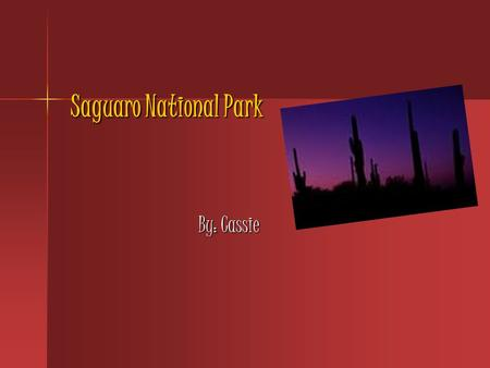 Saguaro National Park By: Cassie. Park Facts Saguaro National Park is located in Tucson, Arizona. Saguaro National Park is located in Tucson, Arizona.