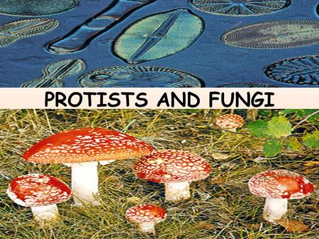 PROTISTS AND FUNGI. Similarities and Differences in the Protist Kingdom All are eukaryotes (cells with nuclei). Live in moist surroundings. Unicellular.