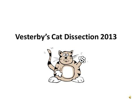 Vesterby's Cat Dissection 2013 Introduction (read this first) Welcome to cat dissection 2010! Each day will begin with logging on to your computer, putting.