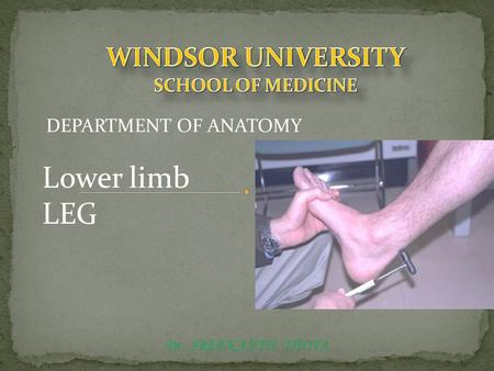 Dr. SREEKANTH THOTA DEPARTMENT OF ANATOMY Lower limb LEG.