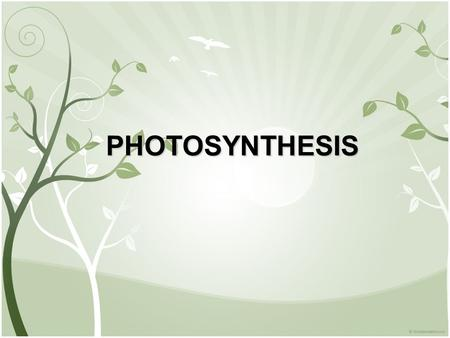 PHOTOSYNTHESIS. I. Autotrophs and Heterotrophs SUN A.Energy for living things comes from the SUN B.Autotrophs- make their own food Ex: plants, some bacteria,